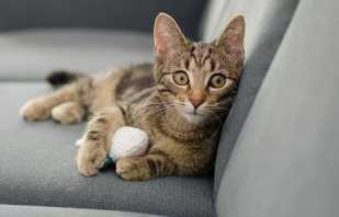 Как вывести с дивана запах кошачьей мочи, народные методы