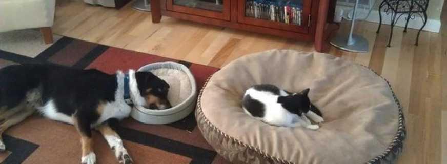 Обзор мебели для животных, как подобрать оптимальный вариант