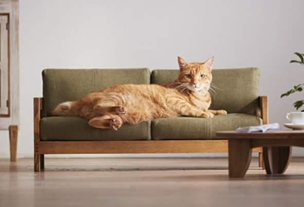 Диванчик для кошки расположенный в квартире