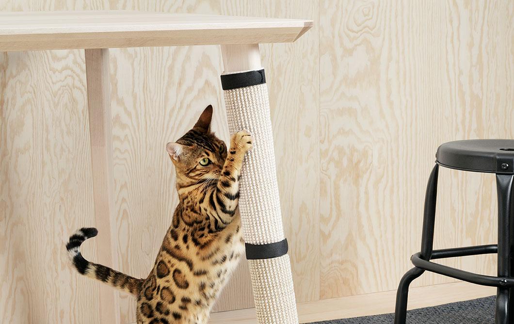 Когнеточка для кошек