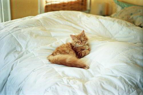 Как отучить кошку гадить на кровать