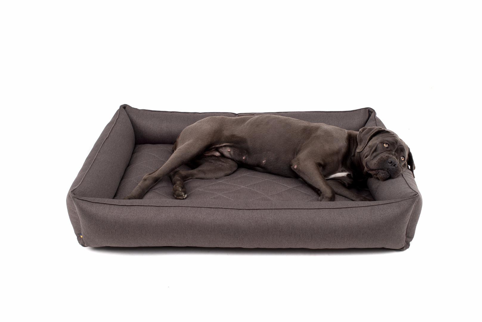 Большая собака на кровати