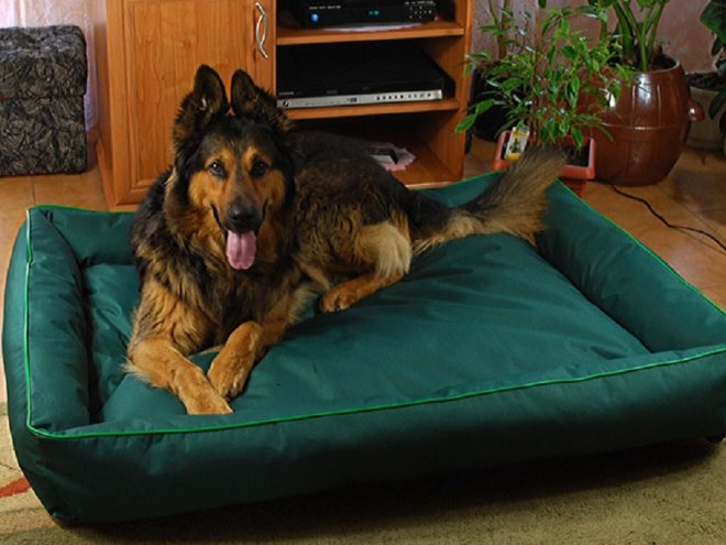 Как обустроить место для сна большой собаки