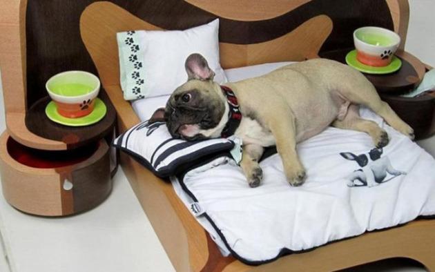 Как правильно выбрать лежанку для собаки