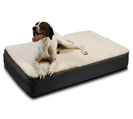Как выбрать цвет и материал мебели для собаки