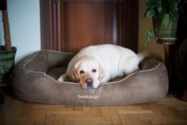 Удобный лежак для собаки