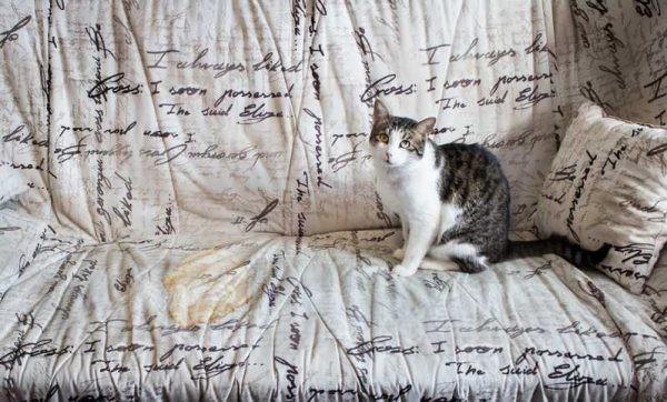 Кошачья моча на диване